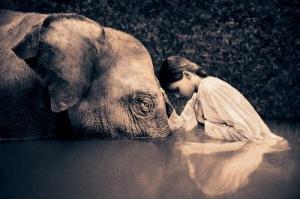 Child & Elephant