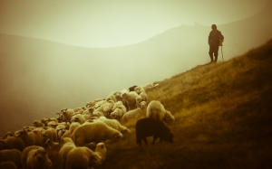 Shepherd & Sheep